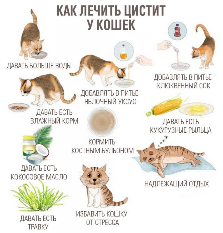 Диета Кошки При Цистите. Диета для кошек при цистите