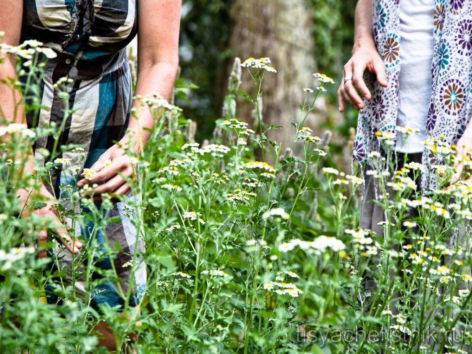 Самые качественные травы это травы, собранные собственноручно