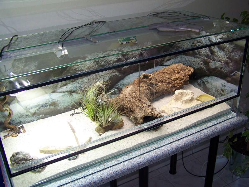 Террариум для ящерицы своими руками фото 86