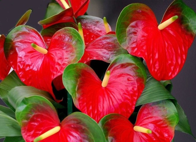 Пожелтение цветка сигнализирует о неблагоприятных условиях