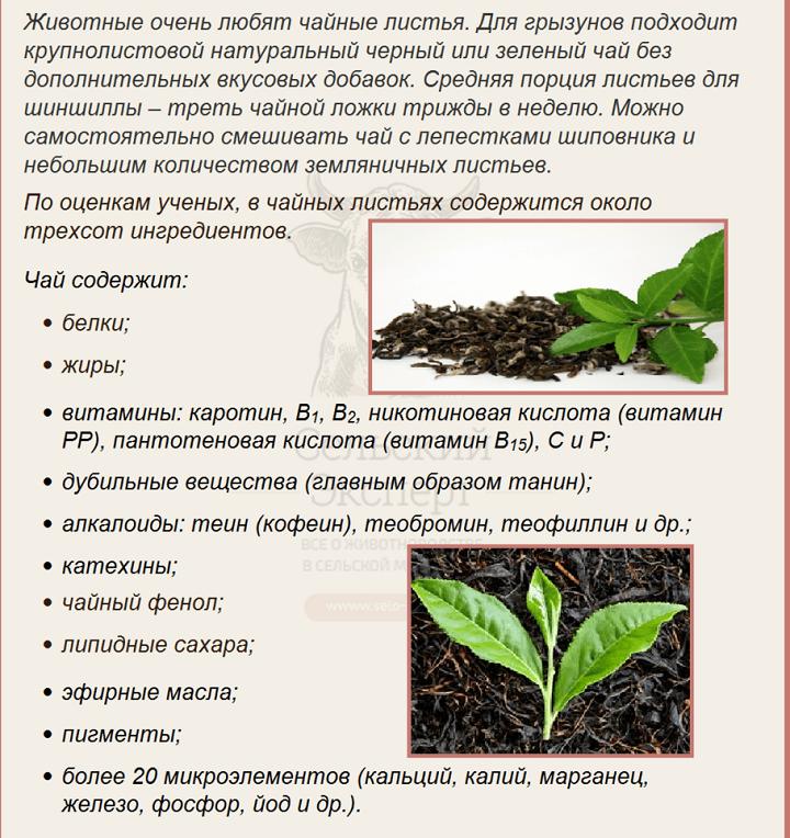 Несколько слов о пользе чая для шиншилл
