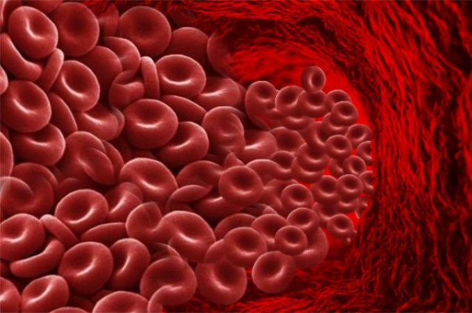 Мята и кровообращение