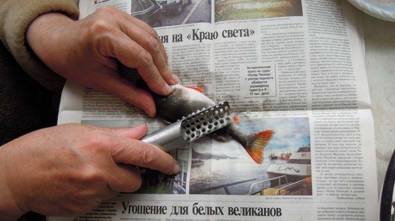 Очистка окуня ножом.