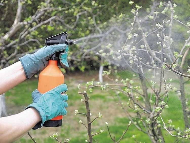 Опрыскивайте деревья указанными средствами