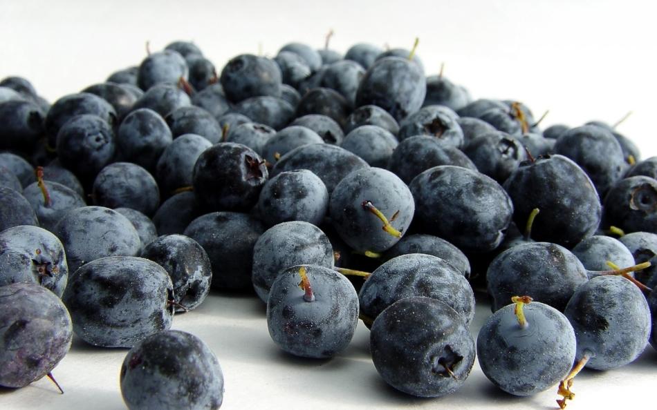 Черника - витаминная ягода