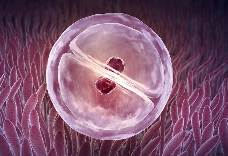 На пол ребенка влияет набор хромосом, но нинак не высчитанные дни