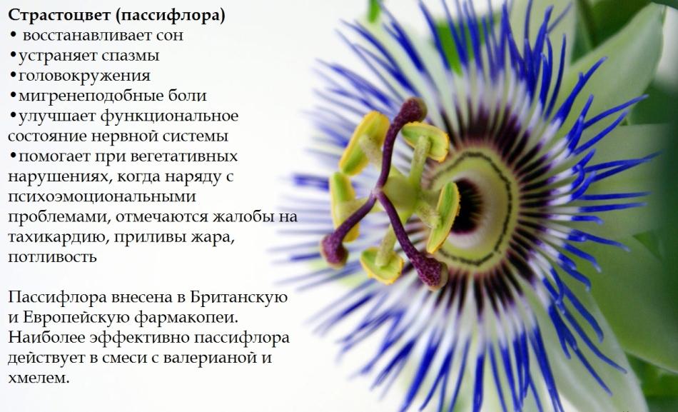 Пассифлора и ее полезные свойства