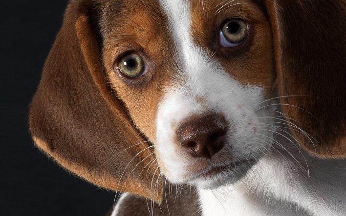 Собака пахнет, линяет