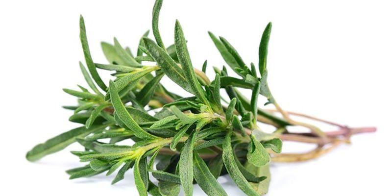 Трава тимьяна