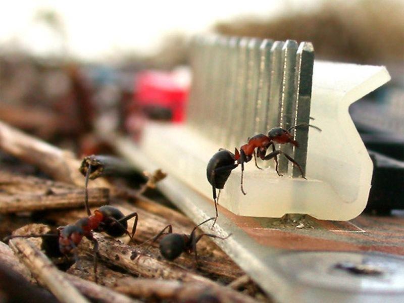 Уксус в борьбе с {amp}quot;домашними{amp}quot; муравьями