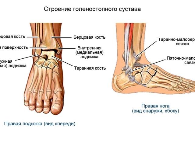 Голеностопный сустав кости строение заболевания височно-нижнечелюстного сустава лечение