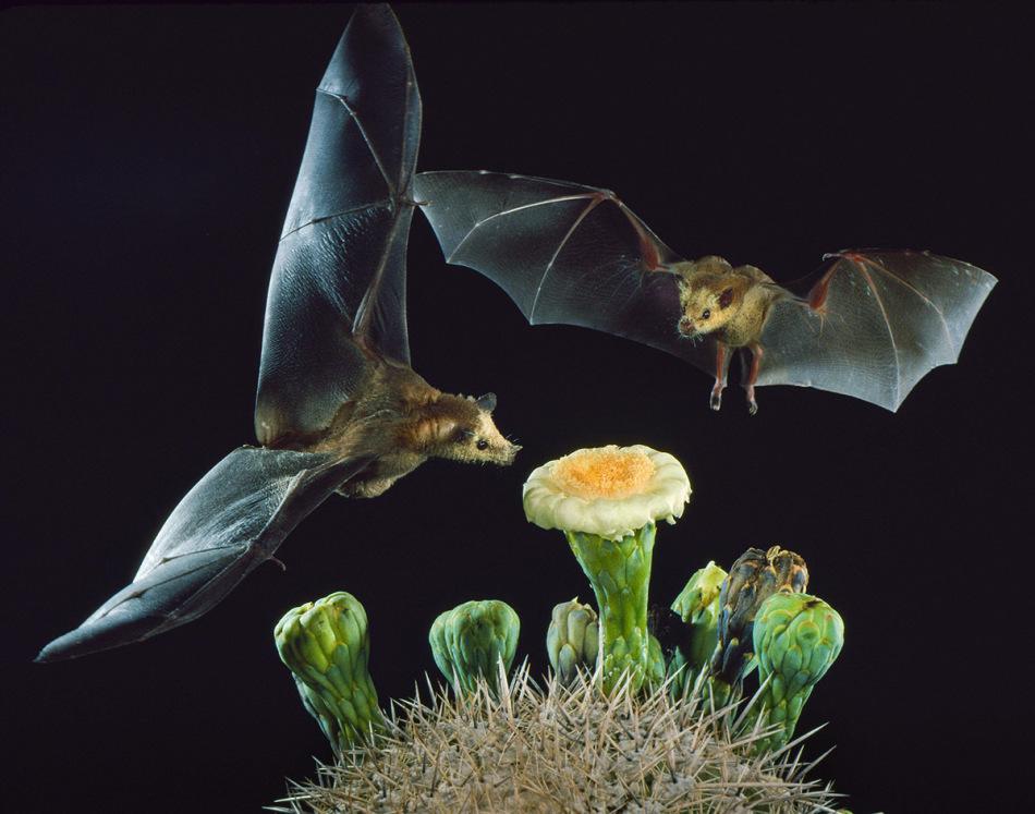 Их называют бабочками в ночи